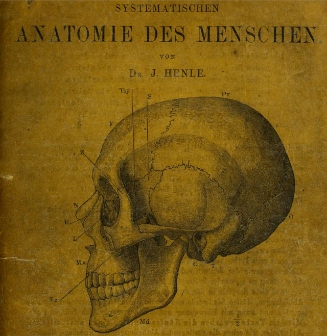 "Front page of ""Handbuch der Knochenlehre des Menschen"" by Jacob Henle (1855) (via Wellcome Library)"